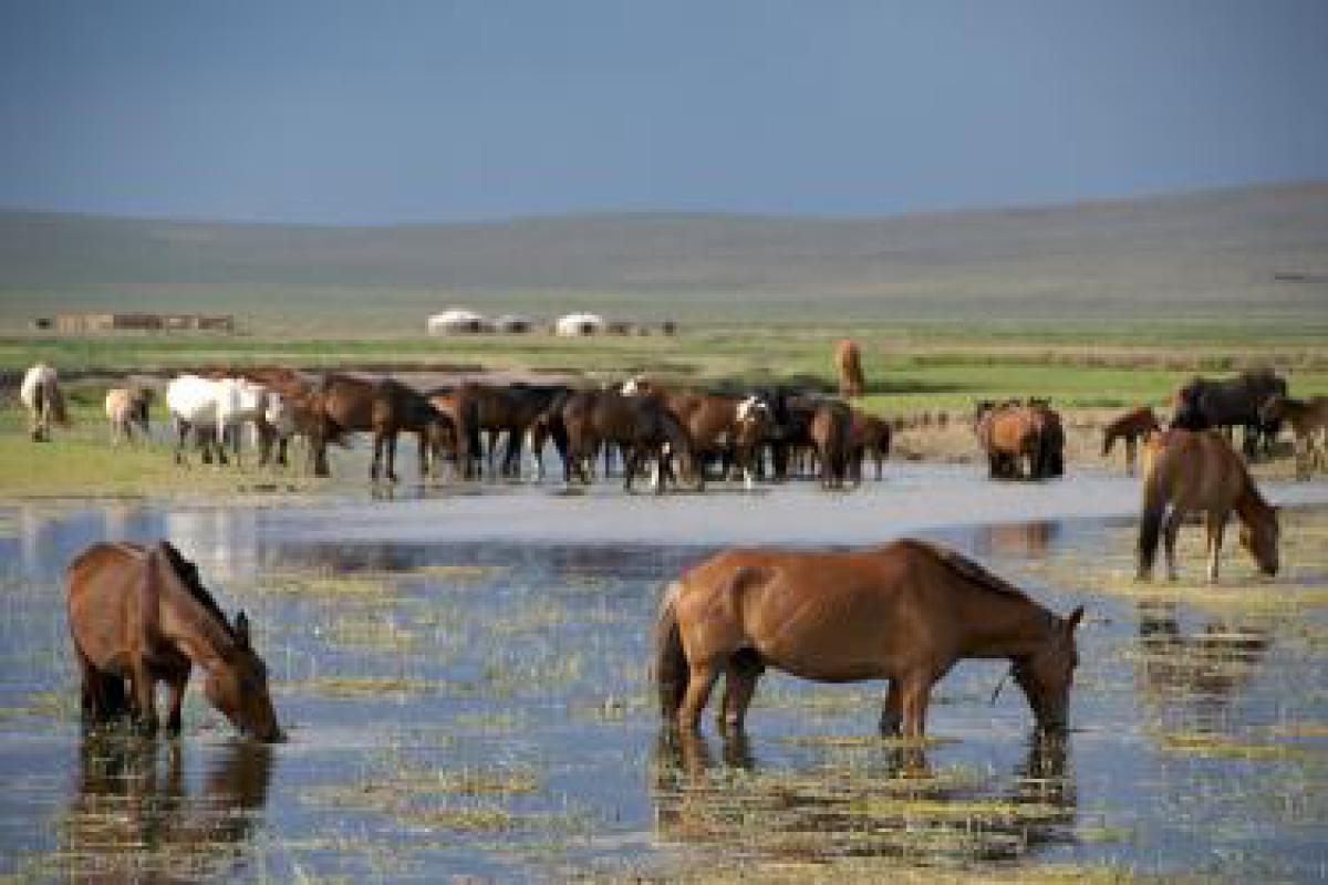 Mongolia Facts, Cultur...